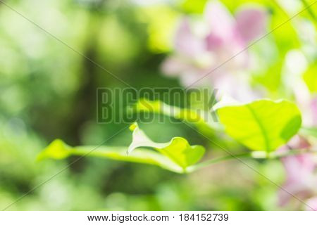 Blured flower on green leaves background, Blured background.