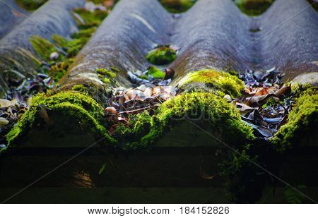 Green moss on some roof tiles in a damp and cold environment