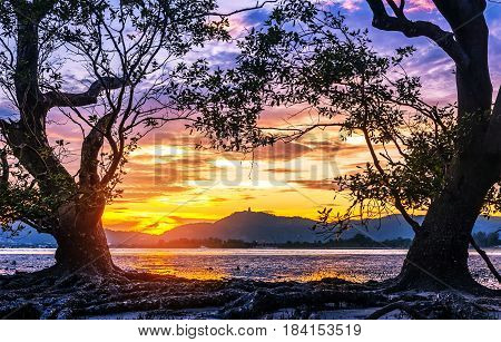 Seascape landscape nature with old tree and colorful of sunset in twilight
