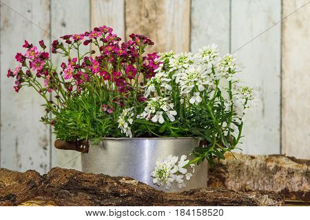 Flowers Are Planted In A Vintage Flowerpot.