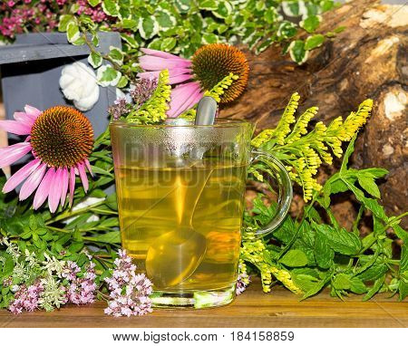 Tea Or Infusion Of Echinaces And Solidago.