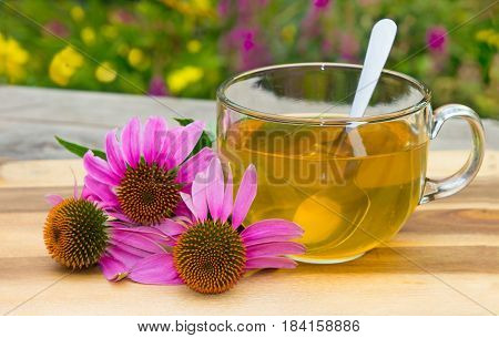 Cup Of Herbal Tea From Echinacea.
