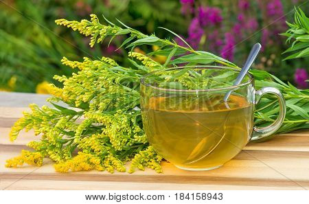 Tea Or Infusion Of Goldenrot Or Solidago.
