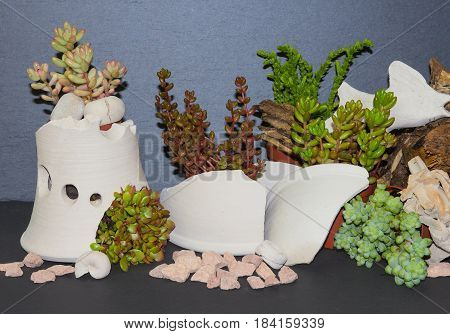 Fanciful Planted Succulents.