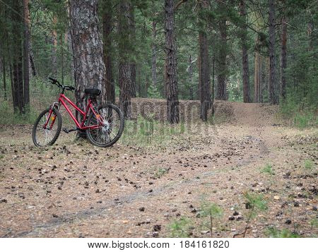 Mountain bike ready to go on a trail in the woods with sunrise background. Walking footpath or biking path.
