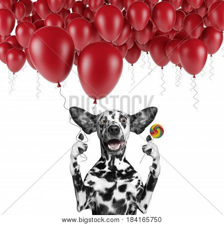 Cute dalmatian dog with balloon and lollipop -- isolated on white