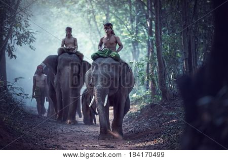 Asian Elephants and Mahout at countryside of Thailand