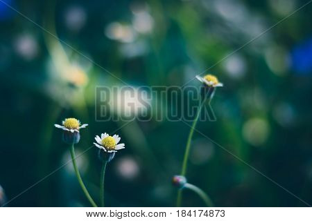 Blurry And Soft Focus Of Grass Flower In Field At Bad Weather
