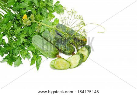 Several whole fresh cucumbers one sliced cucumber stalk of the cucumber with leaves tendrils and flowers and inflorescence of dill against of the bundle of the parsley on a light background