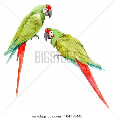Beautiful hand drawn watercolor illustration of green parrots