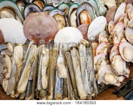 Fresh scallop shell on ice in seafood market, close up image