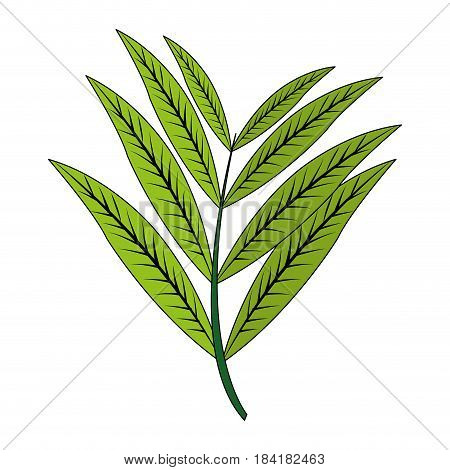 color image realistic branch with elongated leaves vector illustration