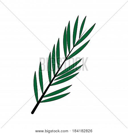 color image branch with elongated leaves vector illustration