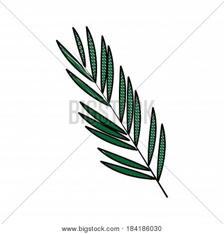 color blurred stripe image branch with elongated leaves vector illustration