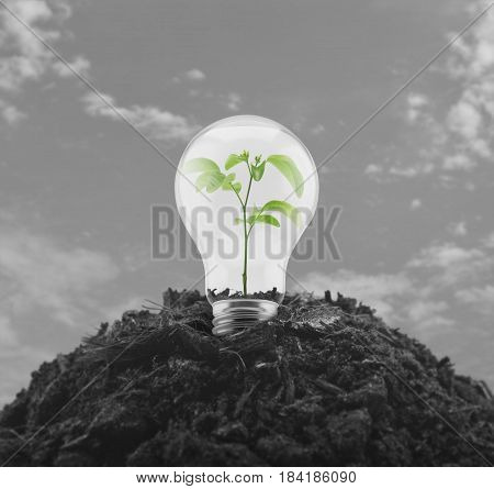 Light bulb with small green leaf plant inside on pile of soil over black and white sky Eco energy concept