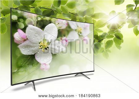 4k monitor isolated on white. Isometric view.  TV panoramic on the background of a spring-like view of green foliage with a bright sun. On the screen a branch of apple blossoms