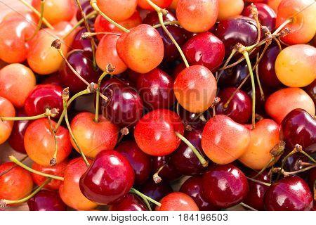 Juicy Sweet Cherries