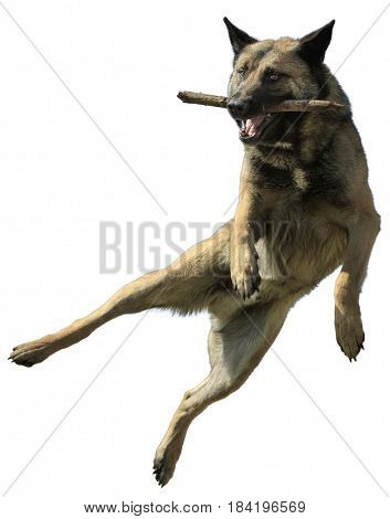 Dog In a Jump With a Stick Isolated on White