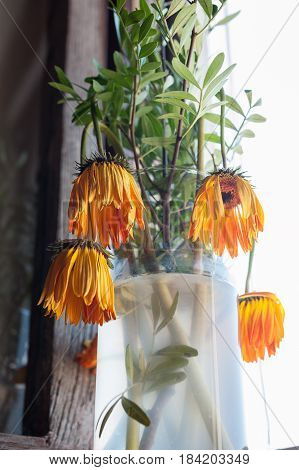 A vase of dried withered yellow flowers