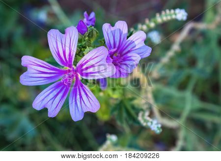 Beautiful and luminous purple flowers in the garden