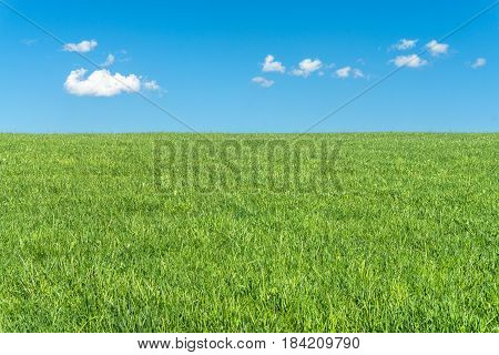 Green grassy meadow on a clear day. Natural eco background with a bright blue sky, clouds and green grass. A lot to copyspace area. Environment or season concept.