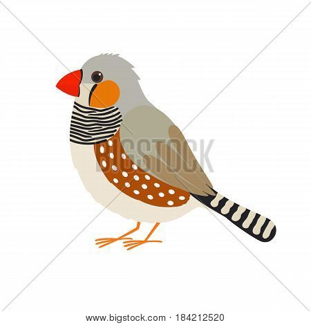 Australian zebra finch. bright colored bird. vector illustration for children isolated on white background
