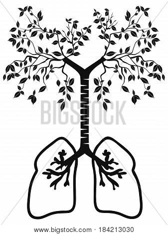 the isolated lung tree from white background