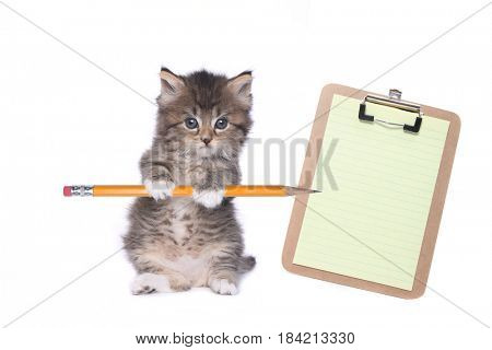 Sweet Kitten Holding Pencil With Blank Clipboard