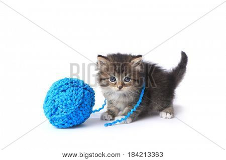Adorable Kitten With Ball of Yarn in Studio