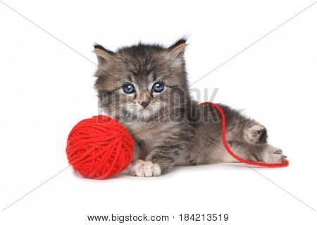 Cute Kitten With Red Ball of Yarn