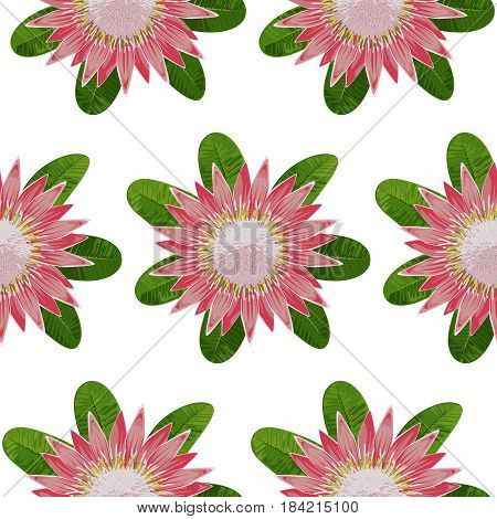 Seamless pattern of tropical flower protea and leaves. Tropic floral wallpaper on white background.