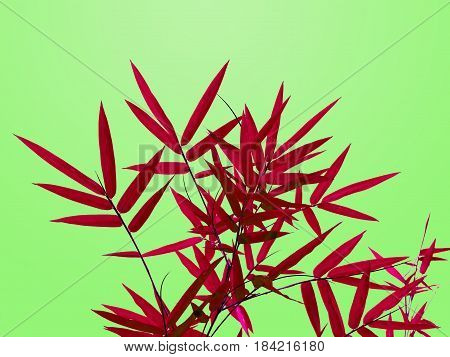Red bamboo leaves isolated in bright green background.