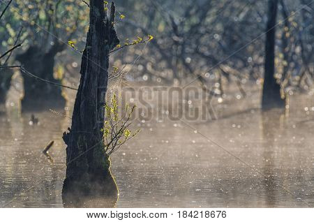 MARSH - Spring image of nature at dawn