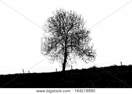 silhouette of a lonely tree in the Dutch countryside