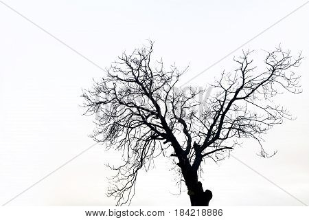 silhouette of a death tree in black and white