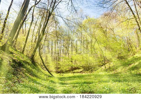 Green Grass On A Meadow In Spring Forest