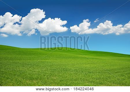 green meadow under a spring sky with white clouds