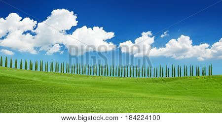 cypress trees on tuscan hill under a blue sky