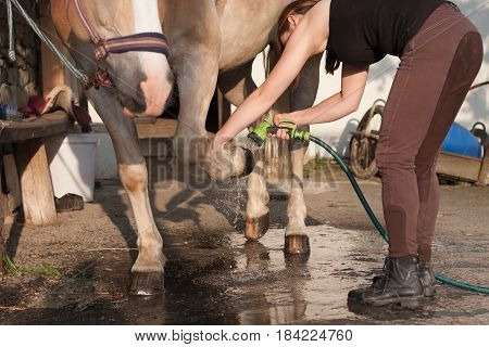 Young woman washing horse hoof by stream of water froma a garden hose.