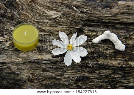 nature driftwood wood and candle with gray stone,gerbera