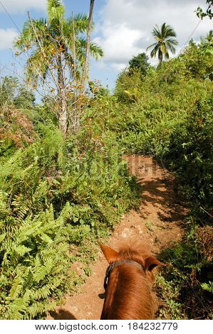 Las Terranes, Dominican Republic - 22 january 2002: riding a horse on the tourist trip to the waterfall of El Limon in the Dominican Republic