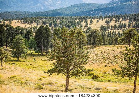 Overlook of Rocky Mountains with plains and pine forest in Colorado tundra
