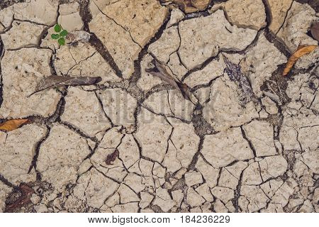 dry cracked earth. The desert. Background. It's hot the global shortage of water on the planet.