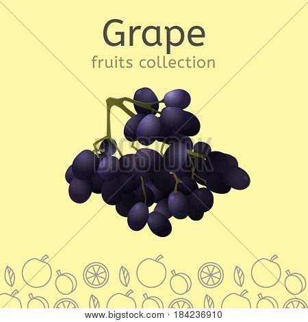 Grape cluster on a light background. Fruits collection. Vector illustration.