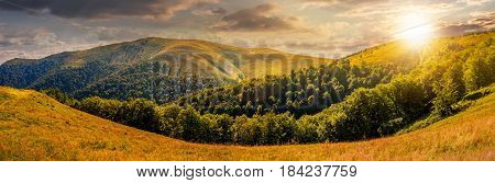 panoramic summer landscape. hillside meadow near the forest in mountains. wonderful summer evening.
