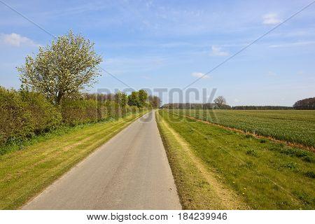 Farm Track And Whitebeam Tree