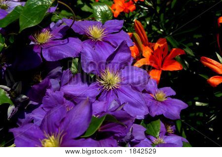 Vivid Purple And Orange
