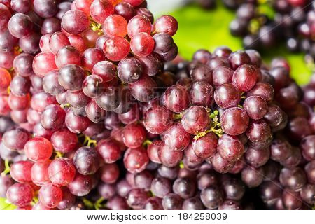 Bunches Of Fresh Ripe Red Grapes, Red Wine Grapes Background