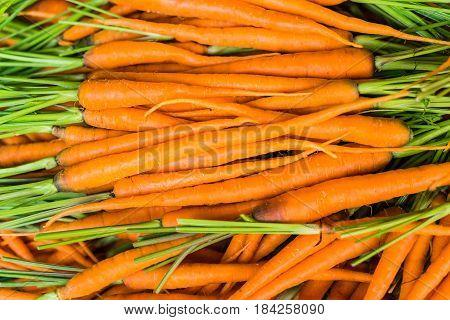 Baby Carrots. Fresh Organic Carrots