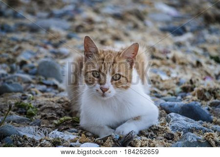 Cat lay on the sea side and looking trought camera